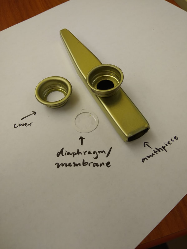 A kazoo disassembled into a metallic body, a cellophane diaphragm, and a ring-shaped membrane cover.